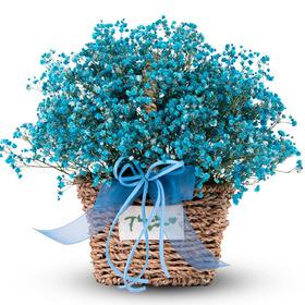 블루안개꽃바구니