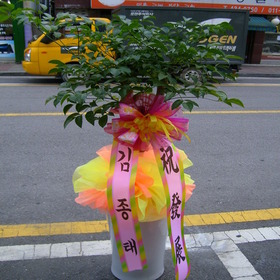 행복나무(행복수)16