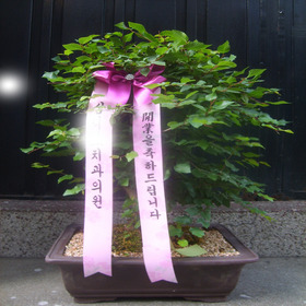 소사분재0054